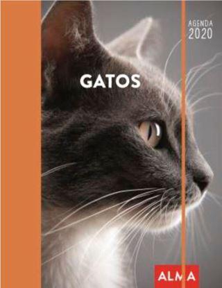 Imagen de GATOS 2020